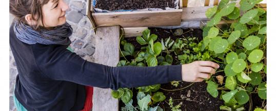 Les incroyables Comestibles vers l'autonomie alimentaire. Vraiment ?